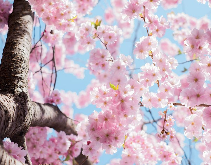 春を感じる、spring watch