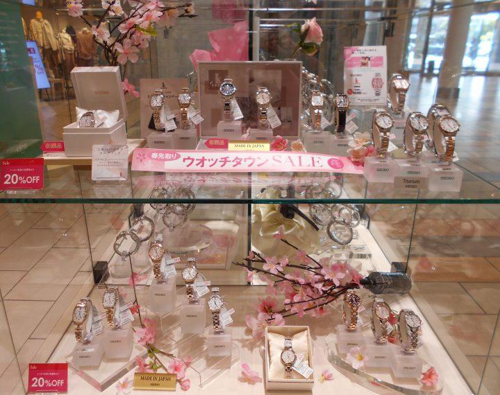 小田原の桜満開🌸